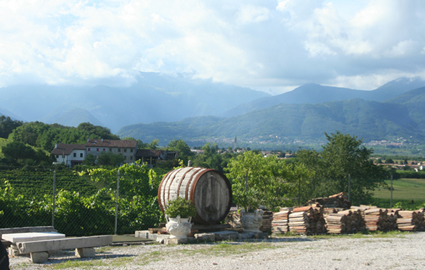 image: The view from our hotel, a working vineyard in Italy's main Prosecco-producing region