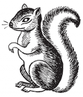 image: squirrel, animal